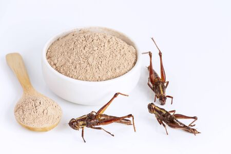 Grasshopper insect powder. Orthoptera flour for Insects eating as food edible items made of cooked insect meat in bowl and spoon on white background is good source of protein. Entomophagy concept. Banco de Imagens