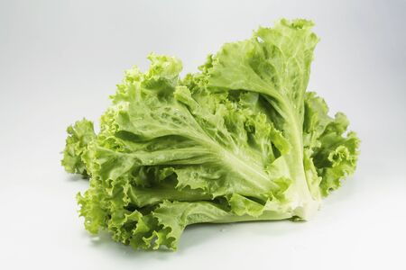 Fresh lettuce leaf for cooking food healthy or vegetable salad isolated on white background, it is good source of vitamin edible and delicious.