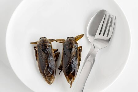 Giant Water Bug is edible insect for eating as food Insects cooking deep-fried snack on white plate with fork on gray background, it is good source of protein. Entomophagy concept. 스톡 콘텐츠