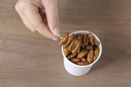 Woman eating Insects Silkworm Pupae (Bombyx Mori). Her hand holding disposable cup which containing worm snack deep-fried for take-away. It is good source of protein edible. Entomophagy concept.