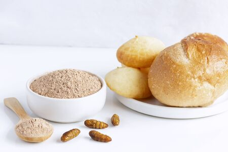 Silkworm Pupae powder. Insects flour for eating as food items made of cooked insect meat in bowl and spoon on white background is good source of protein edible. Future of food, entomophagy concept. Stock Photo