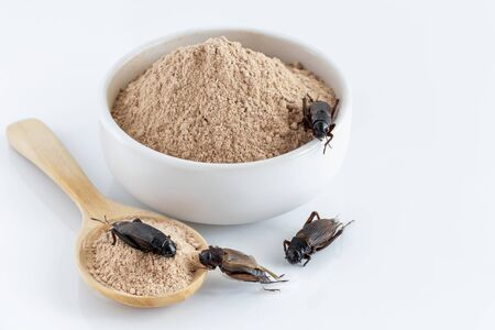 Cricket powder insect and pile Gryllus Bimaculatus for eating as food items made of insect meat in bowl on white background is good source of protein edible for future and entomophagy concept. Stock Photo
