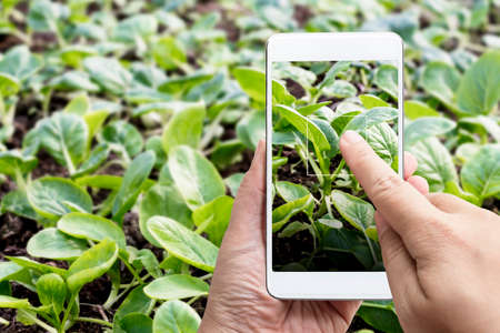 Smart farming agribusiness and technology. Farmer hand using smart phone scanning track application detail of plant growing produce agricultural farm for verify quality between producer and consumer.