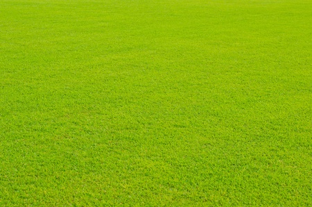 Green lawn in the tropical rain forest  photo