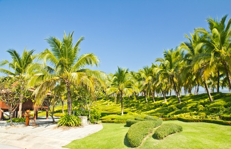 Coconut plantations in the park   Stock Photo - 12474685