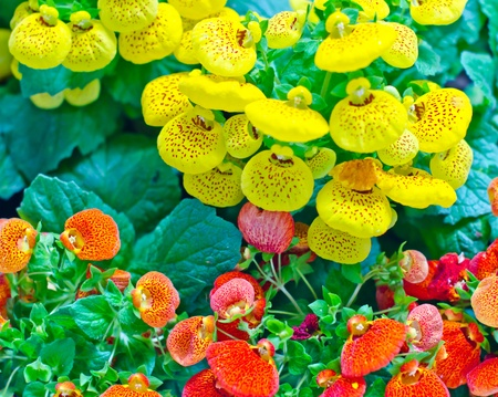 Colorful flowers Stock Photo - 12829837