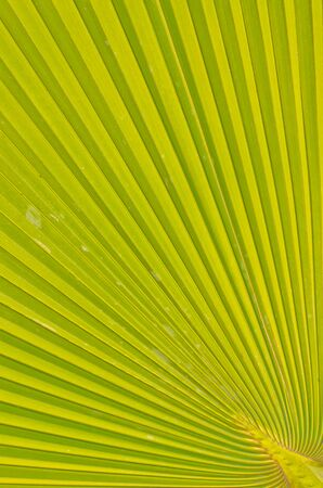 Pattern of palm leaves  photo