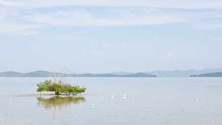 tree in the sea, and drove a white egret  Stock Photo