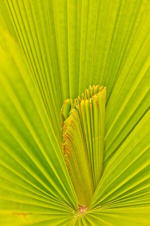 Pattern on the palm leaves of tropical forest  Stock Photo - 13195078