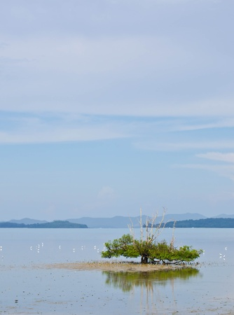 tree in the sea, and drove a white egret  Stock Photo - 13255358