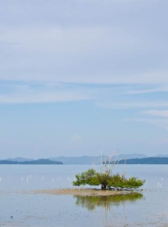 drove: tree in the sea, and drove a white egret  Stock Photo