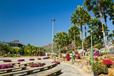 palm garden: Ornamental palm garden in north of thailand