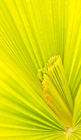 Pattern on the palm leaves of tropical forest  Stock Photo