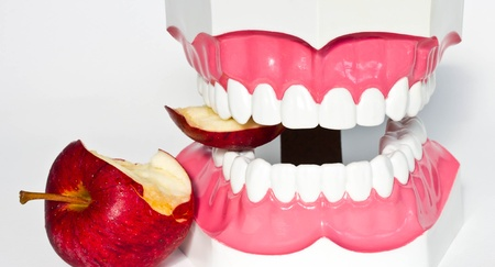 Tooth model and red apple