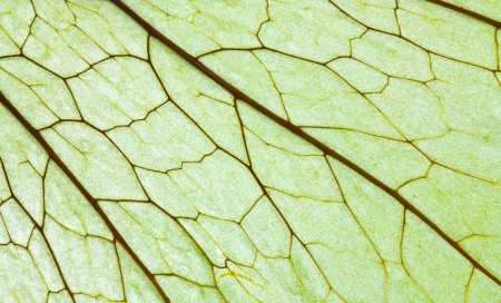 Beautifuldetails on the leaves. photo