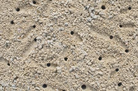 Detailed pattern of crab holes in the sand
