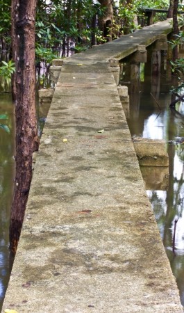Walk way in mangrove forests in southern Thailand  photo