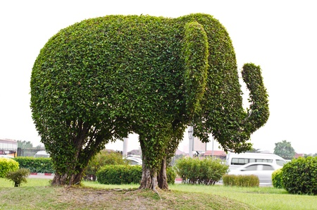 Elephant Made of banyan tree trimming in the park.