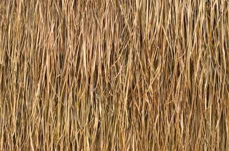 wooden hut: Thatched roof of a cottage in the country. Stock Photo