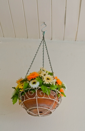 Flower pot hanging on the ceiling  photo