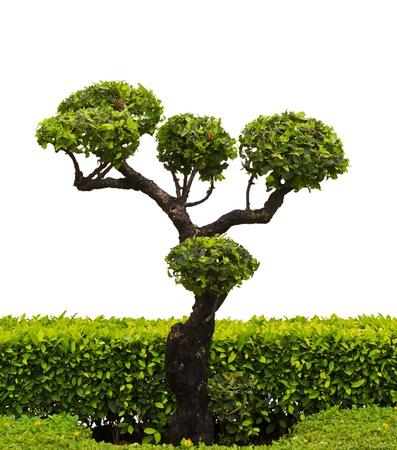 Bonsai trees on a white background
