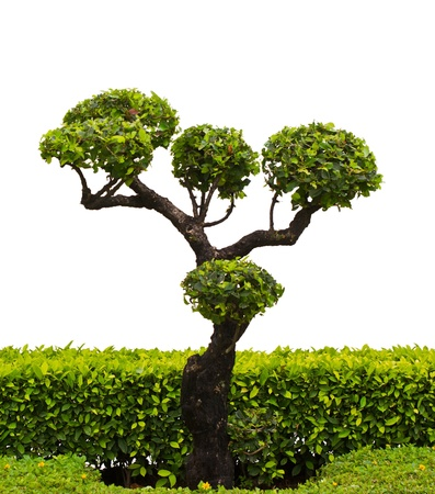 Bonsai trees on a white background