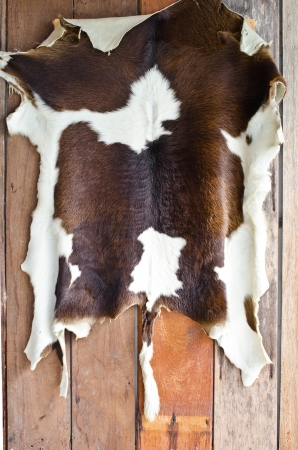 leather coat: Cow skin on the old wooden wall  Stock Photo