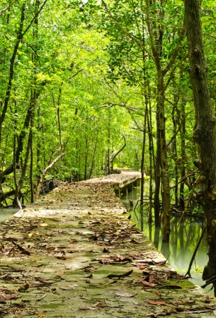 Footbridge at mangrove forest in tropical rain forest