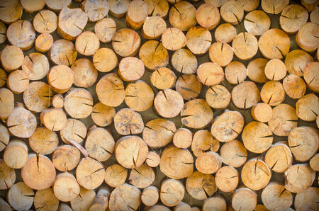 golden section: Cutting wood is arrange to be the natural wall at farm
