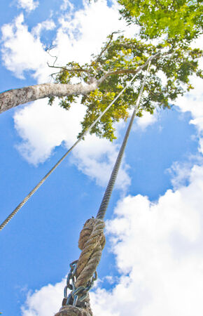 Rope for climbing on the trees  photo