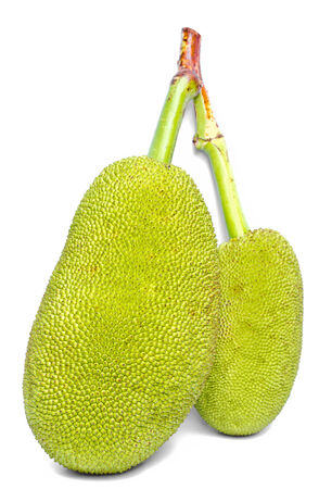 The green jackfruits on white background  photo