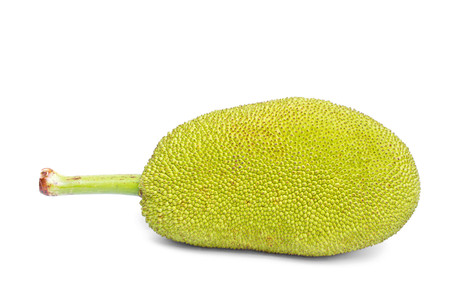 The green jackfruit on white background  版權商用圖片