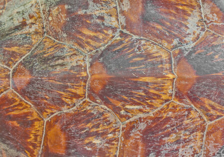 Turtle carapace Background photo