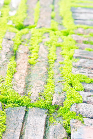 Green grass between bricks background  photo
