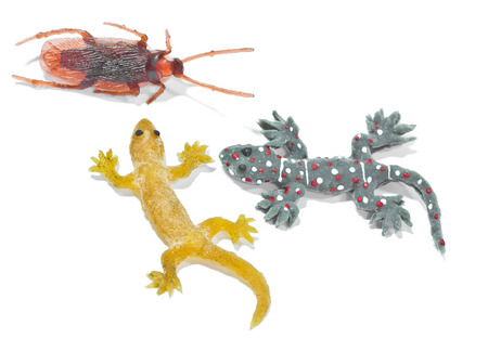 Fake gecko lizard and roache on a white background photo