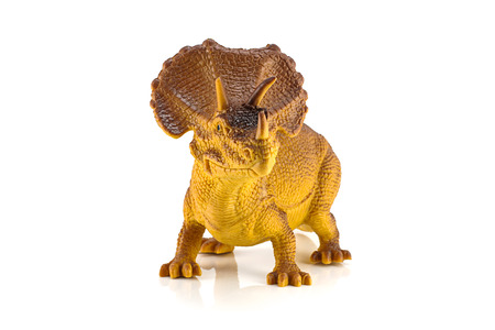 cow teeth: Triceratops dinosaurs toy isolated on white Editorial