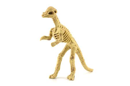 Dinosaurs bone. photo