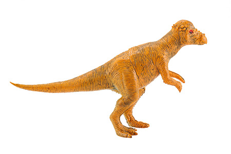 Pachycephalosaurus dinosaur figure toy model isolated on white.