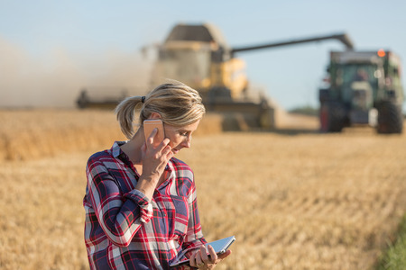 Combine harvester and tractor harvesting wheat in wheatfield Stock Photo