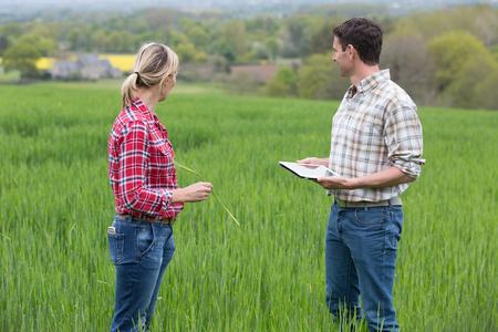 farmers in barley field Stock Photo