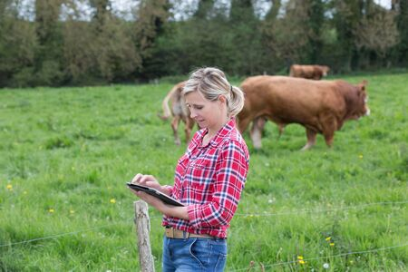 Farmer analysing her herd of cows with notepad