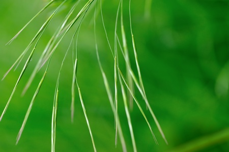 grasses: Grasses in green