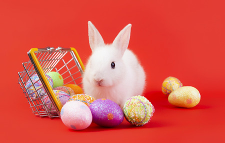 Happy easter eggs collection, Cute White rabbit bunny with basket eggs paint red background.