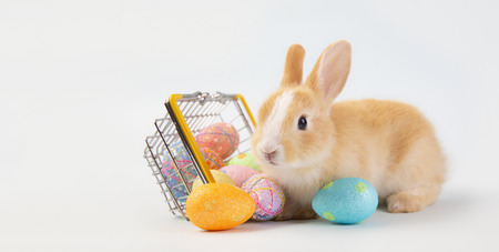 Happy easter eggs collection, Cute brown rabbit bunny with basket and eggs paint blue background.