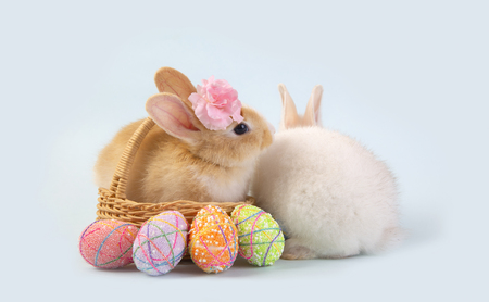 Happy easter eggs collection, Cute White rabbit bunny and brown rabbit bunny in basket and eggs paint blue background. Stock Photo