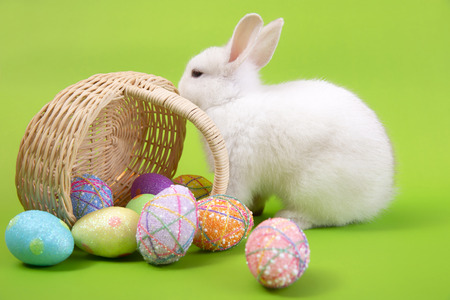 Happy easter eggs collection, Cute White rabbit bunny with basket eggs paint green background.
