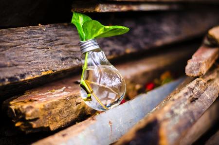 Plant Wooden Light Bulb