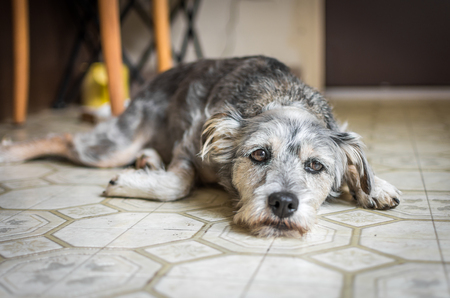 A sad-looking dog lying on the kitchen floor.
