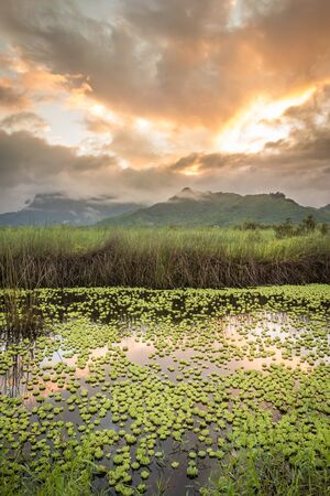 Lily pads floating in the Kawainui Marsh on the island of Oahu, Hawaii, as the calm water reflects a beautiful golden sunset over green mountains. Stok Fotoğraf