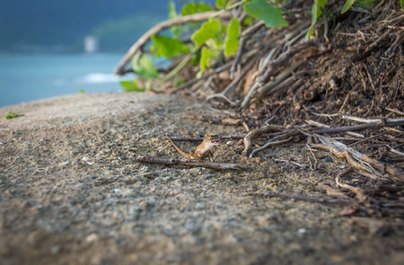 A tiny gecko with a big smile, sitting on top a large rock on the coast of Oahu, Hawaii.